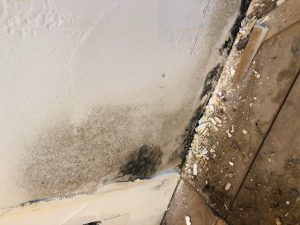 mold assessment
